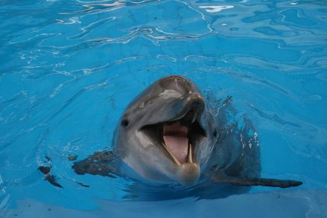 SeaWorld Dolphin, San Antonio