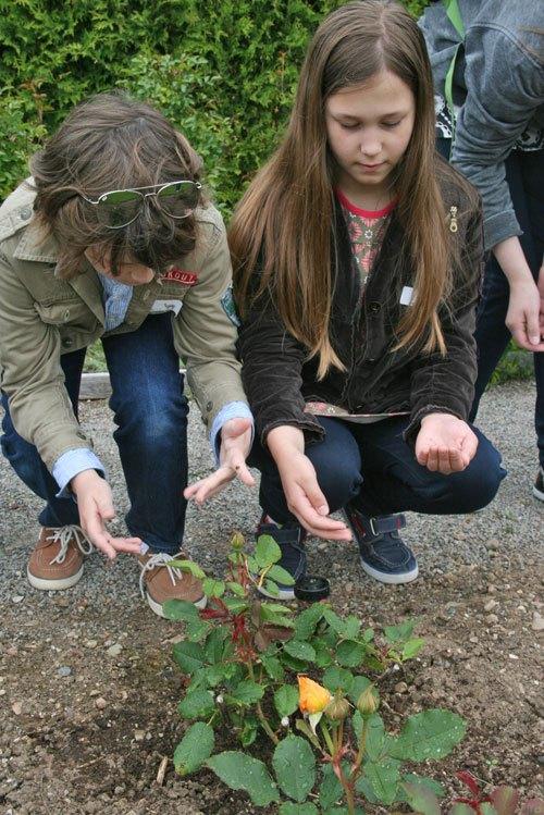 Kingsbrae Garden, Canada, gardens, ladybug release