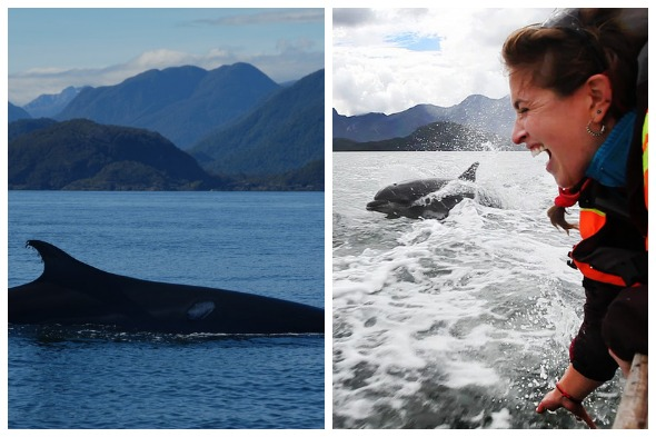 Search for Blue Whales with Celine Cousteau