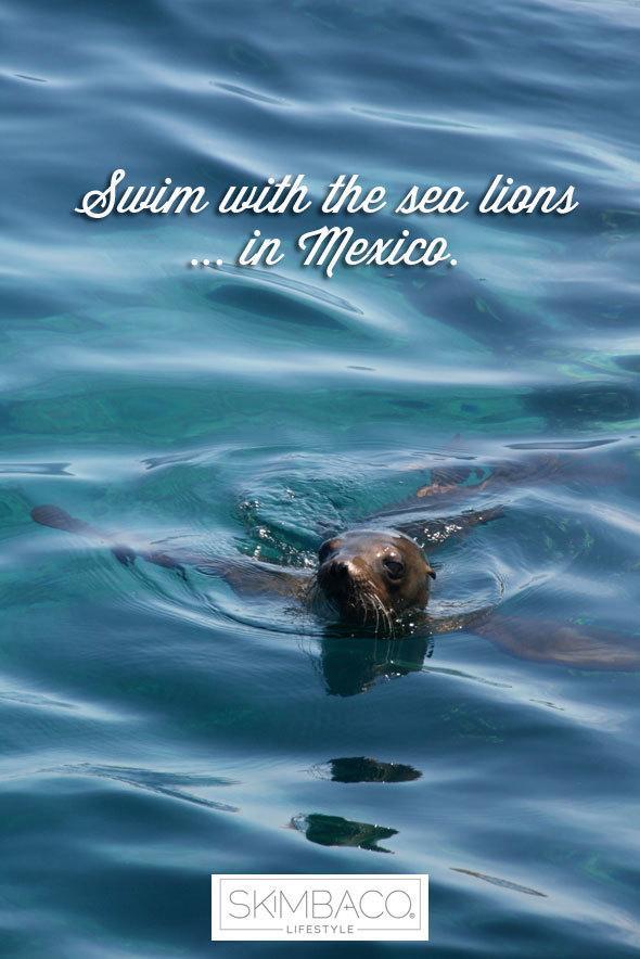 Bucket list: swim with sea lions
