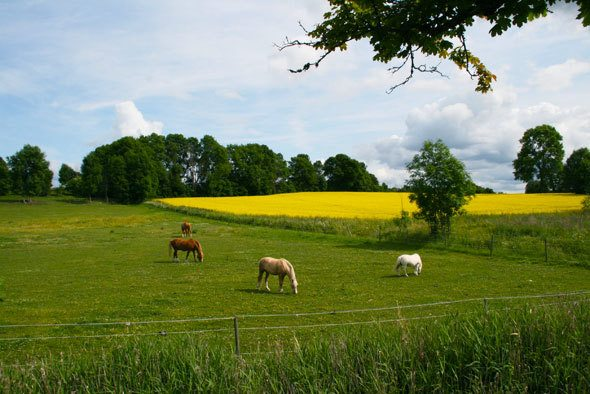 Swedish country side. Travel photo by @katjapresnal