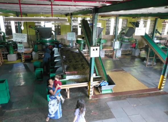 Glenloch Tea Factory in Sri Lanka