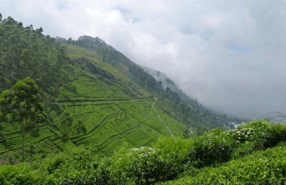 Tea plantations in Sri Lanka Hill Country