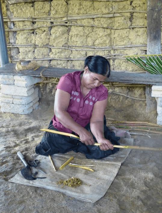 Cutting cinnamon sticks