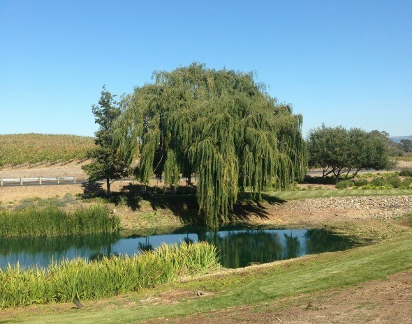 The Grounds at Domaine Carneros Winery