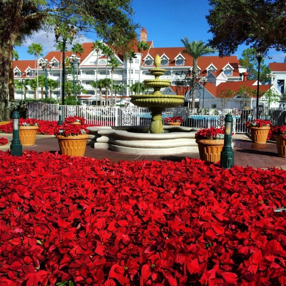 Disney's Grand Floridian at Christmas
