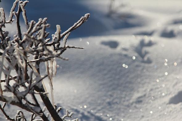 Snowy Frozen Norway I @SatuVW I Destination Unknown