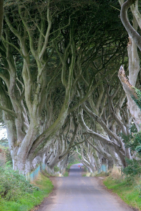The Dark Hedges in Northern Ireland I @SatuVW I Destination Unknown