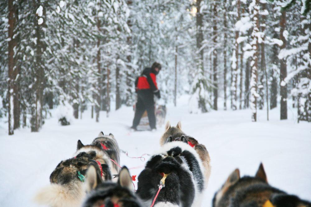 dog safari in Lapland