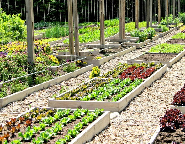 Old Edwards goes farm fresh with garden at hotel