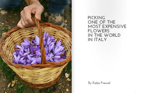 Saffron in Italy