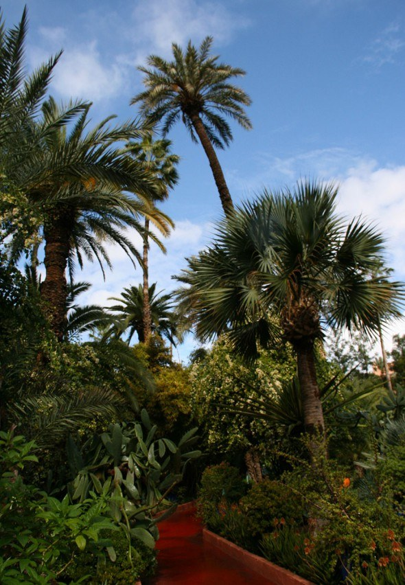 Palm trees in the Garden Majorelle in Marrakech | photo by Katja Presnal @skimbaco
