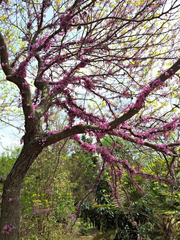 Blooms_J.C. Raulston2