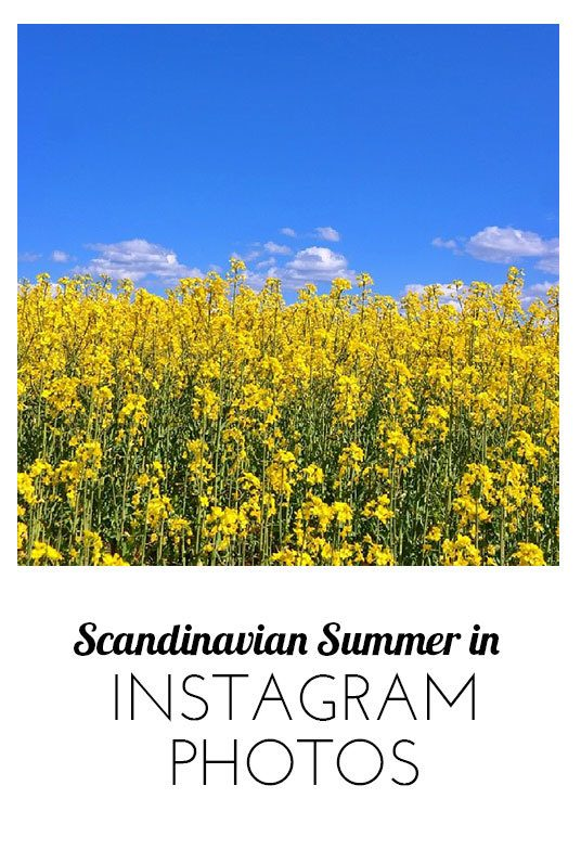Scandinavian summer in Instagram photos