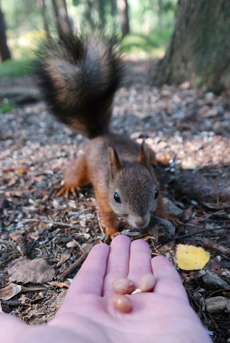 Yes, it's true, even I was able to feed the squirrels!