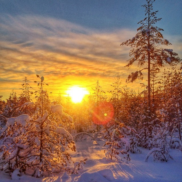 lapland finland winter forest