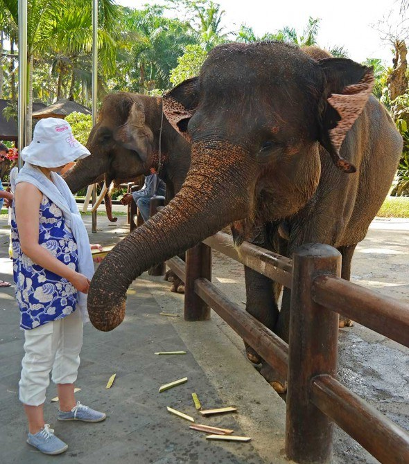 elephant safari in Bali