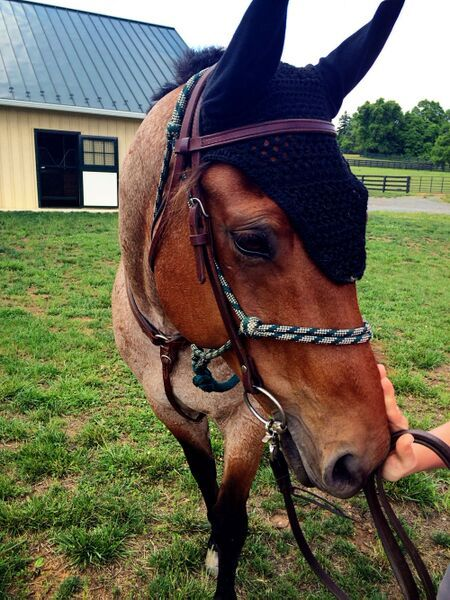 Horses at Salamander Resort and Spa by Keryn Means