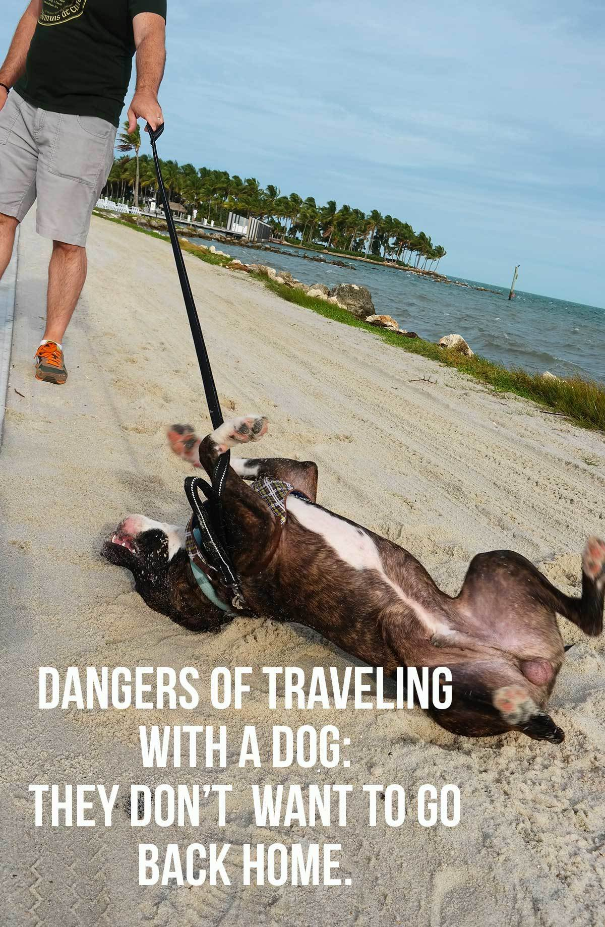 Does traveling with a dog work out? Dangers of traveling with a dog: they might not want to go back home!