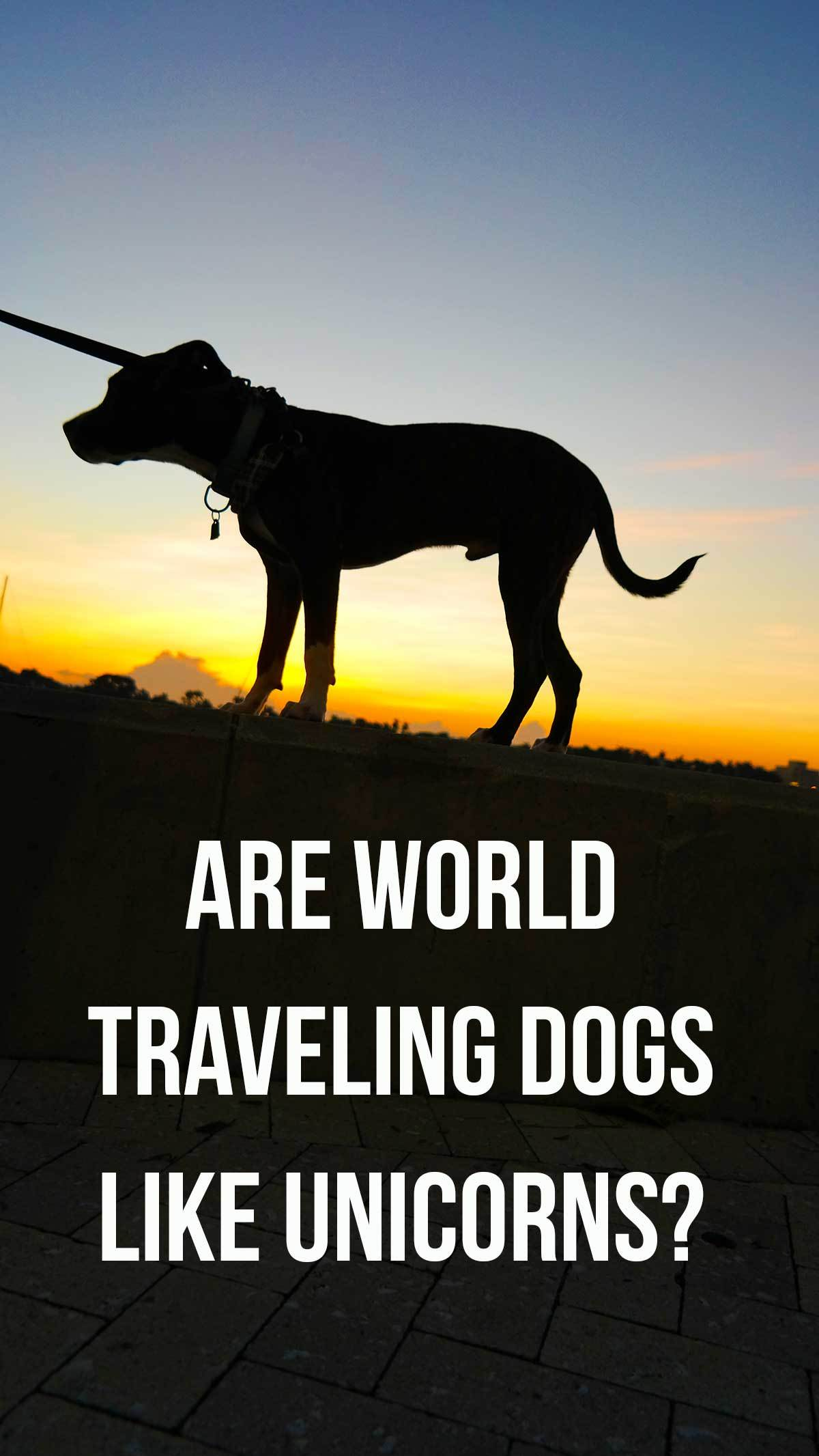 Dogs and Travel Lifestyle: Is it possible to make it work?