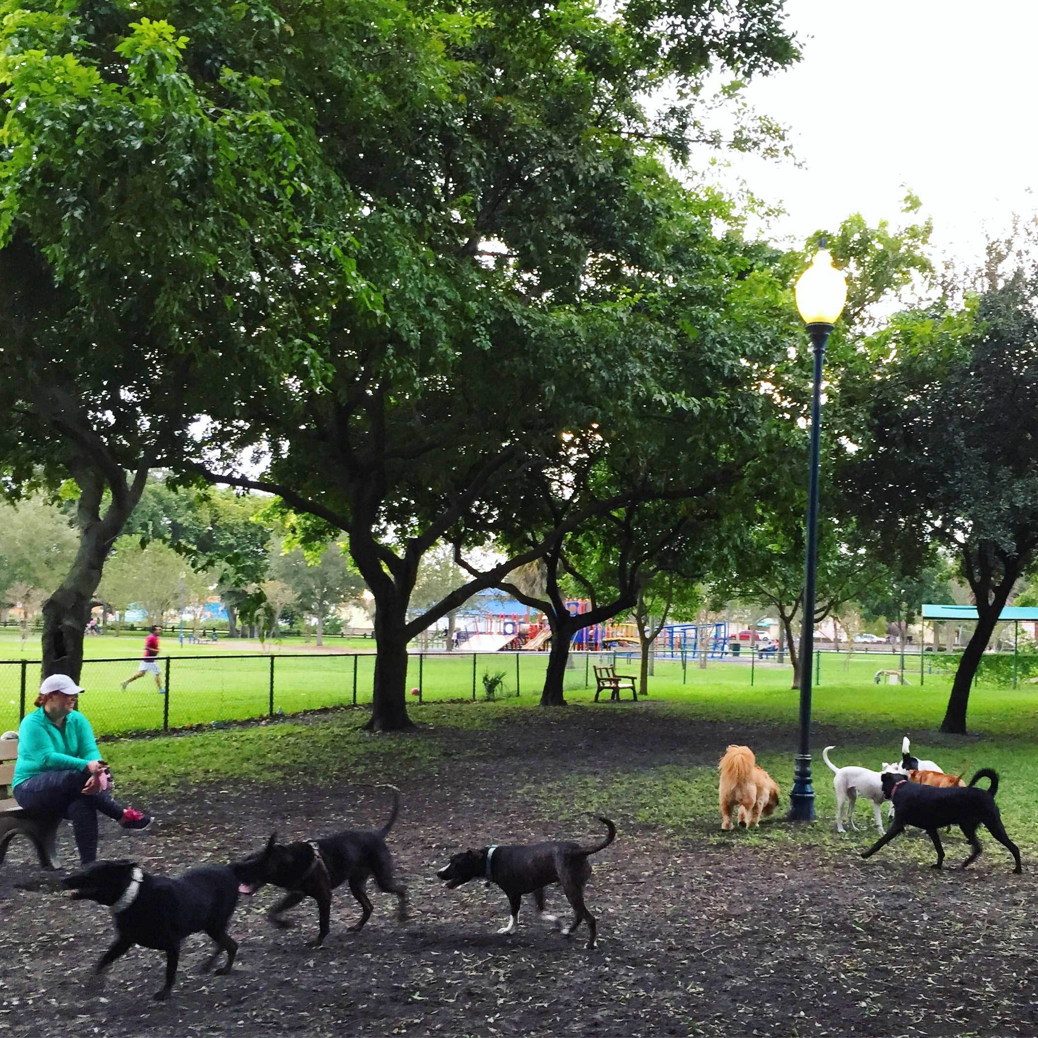 Dog park in West Palm Beach, Florida