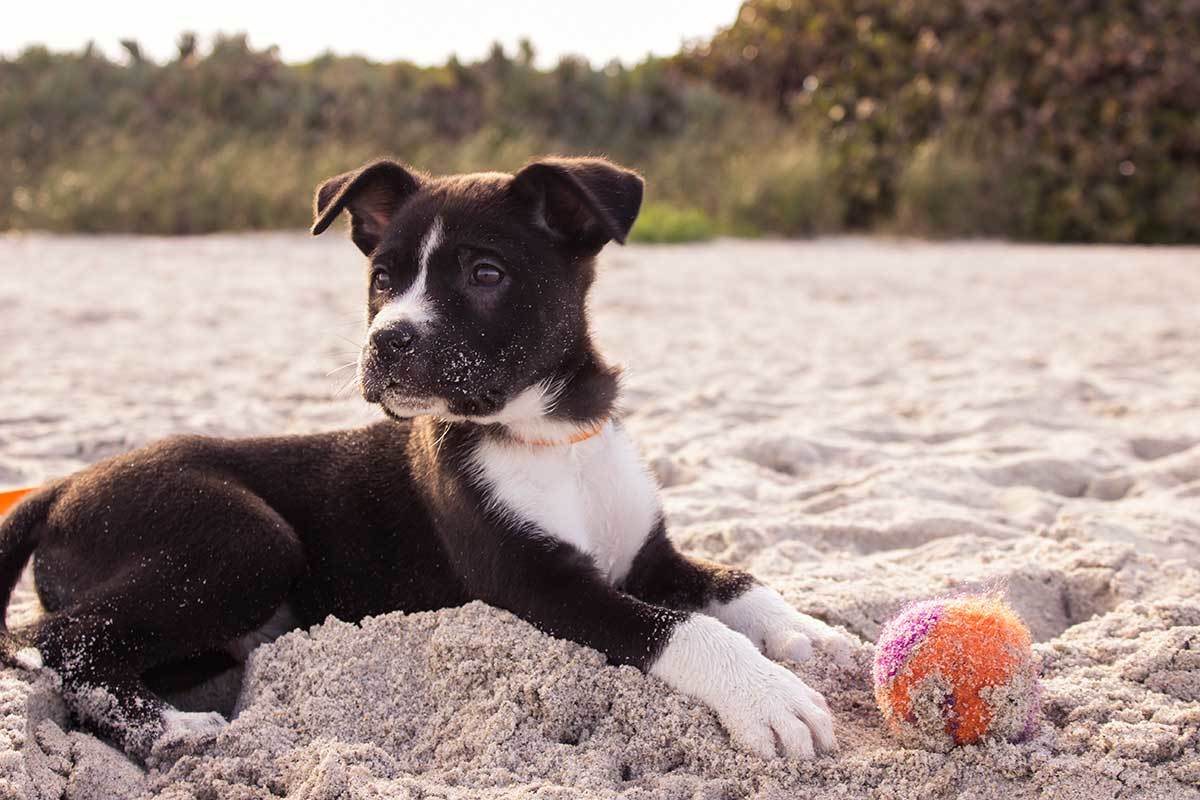 dog-playing-with-a-ball-on-the-beach