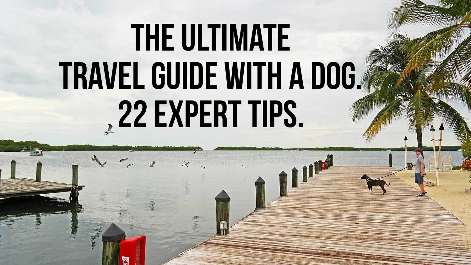 The ultimate travel guide with a dog: 22 expert tips!