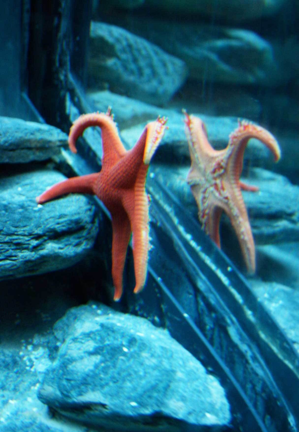 seaworld-starfish