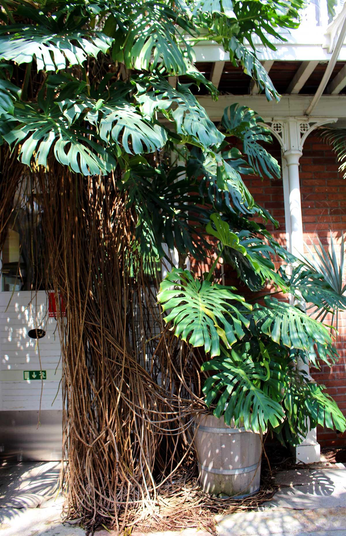 Palmhouse Garden Society, Gothenburg
