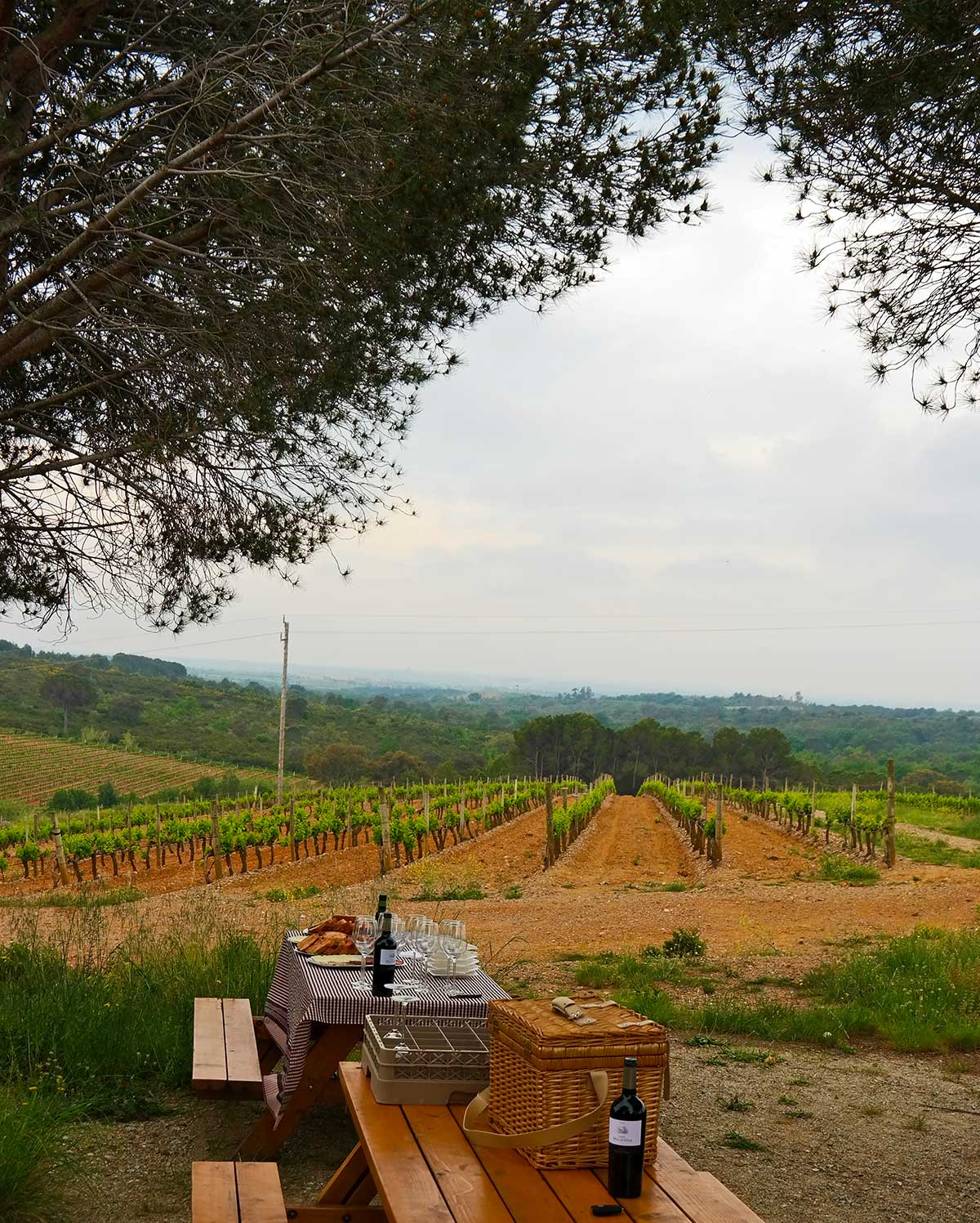 catalonia-spain-wine-vineyards-picnic